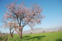Escena del árbol de la primavera Fotografía de archivo