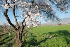 Escena del árbol de la primavera Imagen de archivo