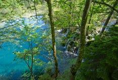 Escena del bosque Imagen de archivo
