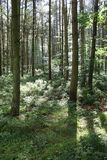Escena del bosque fotografía de archivo libre de regalías
