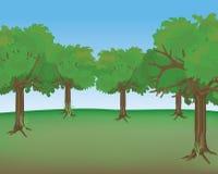 Escena del bosque Foto de archivo