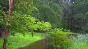 Escena del bosque metrajes