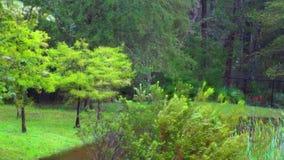 Escena del bosque almacen de video
