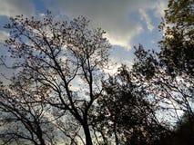 Escena del bosque - cielo del bacground de la rama de árbol foto de archivo