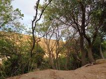 Escena del bosque - cielo del bacground de la rama de árbol - camino de tierra foto de archivo