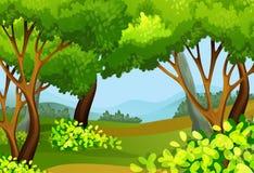 Escena del bosque con los árboles altos Fotografía de archivo libre de regalías