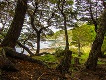 Escena del bosque con muchos árboles y el lago en fondo Foto de archivo libre de regalías