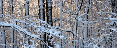 Escena del bosque del invierno Foto de archivo