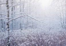 Escena del bosque del invierno fotos de archivo libres de regalías