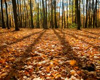 Escena del bosque del otoño Imagen de archivo libre de regalías