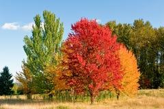 Escena del bosque del otoño Fotografía de archivo libre de regalías