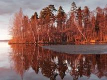 Escena del bosque en la puesta del sol Imagen de archivo libre de regalías
