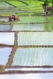 Escena del campo de Bali Foto de archivo libre de regalías