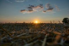 Escena del campo de campos y de pilones de la electricidad contra el cielo de oro de la puesta del sol fotos de archivo