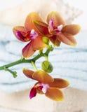 Escena del cuarto de baño de la orquídea del balneario Foto de archivo