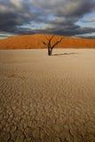Escena del desierto Fotografía de archivo