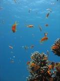 Escena del filón coralino Fotos de archivo