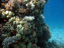 Escena del filón coralino Foto de archivo libre de regalías