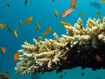 Escena del filón coralino Foto de archivo