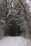 Escena del invierno Foto de archivo libre de regalías