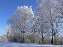 Escena del invierno. Foto de archivo