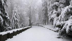Escena del invierno Fotografía de archivo