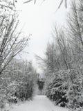 Escena del invierno con los árboles nevados a lo largo de una trayectoria en el bosque fotografía de archivo libre de regalías