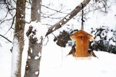 Escena del invierno con nieve y pájaros Imagenes de archivo