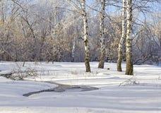 Escena 2 del invierno Corriente y abedules Imagen de archivo