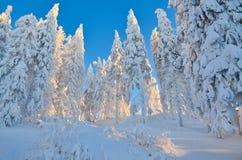 Escena del invierno en la montaña Imagen de archivo libre de regalías