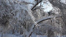 Escena del invierno en parque almacen de video