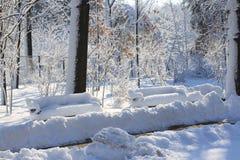 Escena del invierno en parque Fotografía de archivo libre de regalías