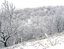 Escena del invierno Nevado fotografía de archivo