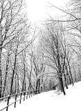 Escena del invierno Nevado Foto de archivo libre de regalías
