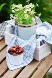 Escena del jardín junio o julio con la fresa salvaje orgánica escogida fresca Imagen de archivo libre de regalías