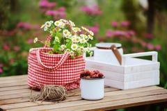 Escena del jardín junio o julio con las flores orgánicas escogidas frescas de la fresa salvaje y de la manzanilla en la tabla de  Fotos de archivo