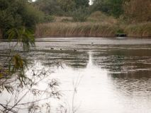 Escena del lago country con los pájaros en agua en otoño cubierto superior nosotros Foto de archivo libre de regalías