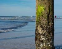 Escena del océano, hombre y los posts del embarcadero Imagen de archivo