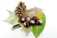 Escena del otoño Imagen de archivo