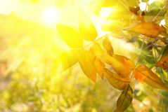 Escena del otoño Fotografía de archivo libre de regalías