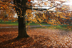 Escena del otoño Imagen de archivo libre de regalías
