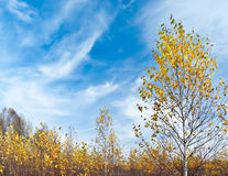 Escena del otoño Foto de archivo