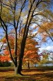 Escena del otoño Foto de archivo libre de regalías