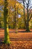 Escena del otoño (caída) Imagen de archivo libre de regalías