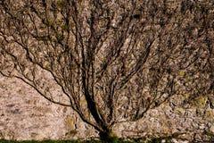 Escena del otoño, castillo Cumbria de Sizergh imagenes de archivo