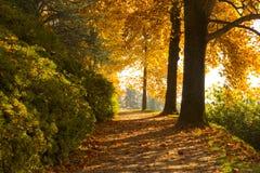 Escena del otoño con los árboles coloridos Fotos de archivo
