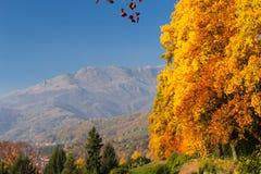 Escena del otoño con los árboles coloridos Imagen de archivo libre de regalías