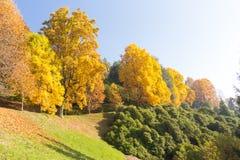 Escena del otoño con los árboles coloridos Imagen de archivo