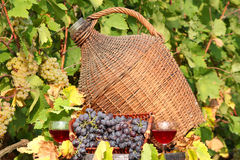 Escena del otoño del vino rojo Imágenes de archivo libres de regalías