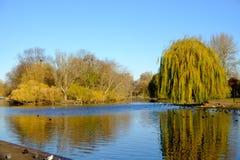 Escena del otoño en el lago del canotaje en parque regente del ` s Imagen de archivo libre de regalías